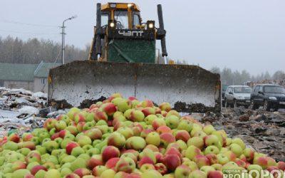 В Смоленской области захоронили более 70 тонн фруктов, овощей и грибов