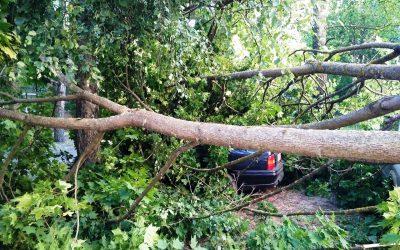 Дерево упало на три автомобиля  в Смоленске