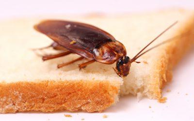 Детский сад в Сафонове заполонили тараканы