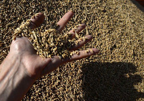 5 лет тюрьмы за пшеницу?
