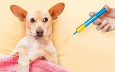 Бесплатная вакцинация животных пройдет в Смоленске