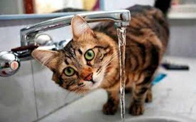 В десятках домов Смоленска отключат холодную воду