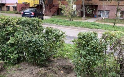 В смоленском сквере на улице Ломоносова  выкорчевали недавно высаженные кустарники