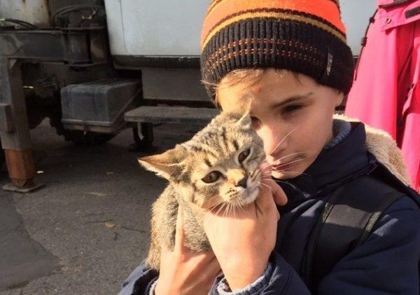 Смоляне рассказали, кто спас котенка, просидевшего два дня на верхушке дерева