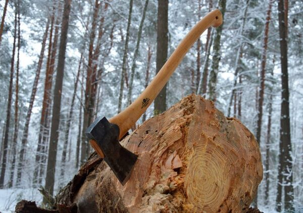 Сходил в лес по дрова на 570 тысяч рублей
